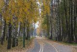 Autumn bikeway